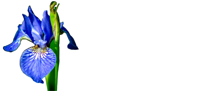 Flowers for Feelings